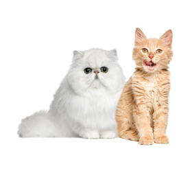 Cats Products on PetSutra