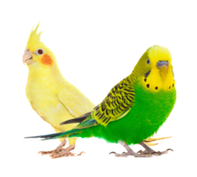 Birds Products on PetSutra