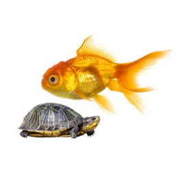 Aquatic Animals Products on PetSutra